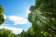 Green Trees Tops On Blue Sky Background Stock Photo