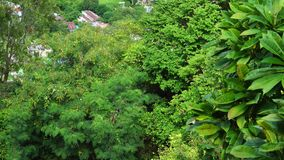 Green trees at the Tra Su forest in Mekong Delta, Vietnam.  stock video