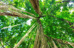 Green trees in tropical rainforest Stock Photo