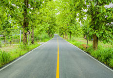 Green trees tunnel. Road in the green trees tunnel Stock Images