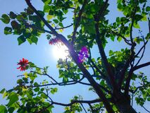 Green Trees Under Blue Sky during Daytime Royalty Free Stock Photo