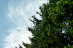Green Trees Under Blue and White Cloudy Sky during Daytime Royalty Free Stock Images