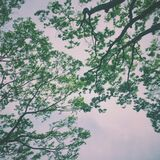 Green Trees Under Nimbus Clouds Royalty Free Stock Image