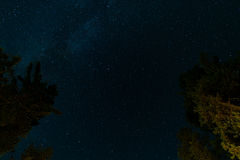Green Trees Under Starry Night Royalty Free Stock Photography