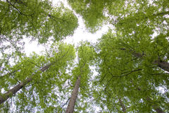 Green trees upwards Royalty Free Stock Images