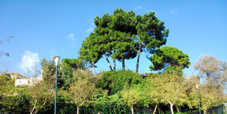Green trees , vegetation and the blue sky. In Corfu island Greece Royalty Free Stock Images