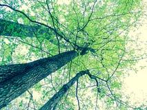 Green trees Stock Photos