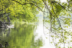 Green trees and west internal lake Stock Image