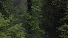 Green trees in wet forest after summer rain. Vibrant trees in rainy forest