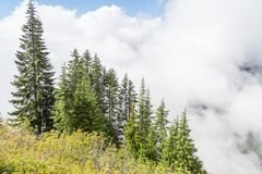 Green trees on the mountain in the clouds Royalty Free Stock Images