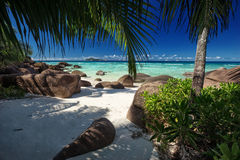 Green trees on a white sand beach with boulders Royalty Free Stock Image