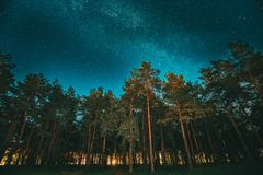 Green Trees Woods In Park Under Night Starry Sky With Milky Way Galaxy. Night Landscape With Natural Real Glowing Stars