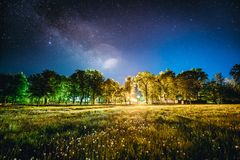 Green Trees Woods In Park Under Night Starry Sky. Night Landscape