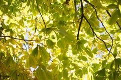Green treetop Royalty Free Stock Photo