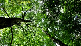 Green treetop Royalty Free Stock Photos