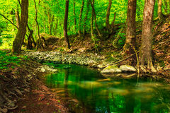 Green treetops in a forest creek. Reflection of green treetops in a forest creek Stock Photography