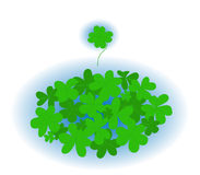 Green trefoil Stock Photography