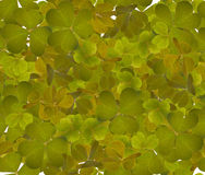 Green trefoil leaves seamless background Stock Photo