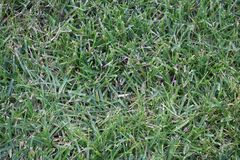 Green trimmed and dry grass, lawn. stock photography