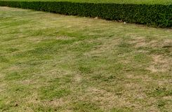 Green trimmed plants. Green grass with trimmed green plants hedge in the park Stock Photo