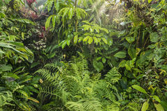 Green tropical background rainforest Stock Images