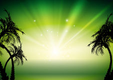 Green tropical background Stock Image