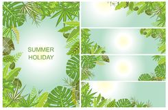 Green tropical backgrounds Stock Photography