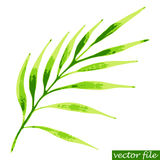 Green tropical branch. Watercolor vector illustration of palm twig Stock Photo