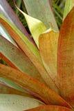 Green tropical Bromelia Stock Image
