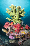 Green tropical coral Stock Photography