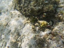 Green tropical fish mimicry in seaweed. Undersea landscape photo.
