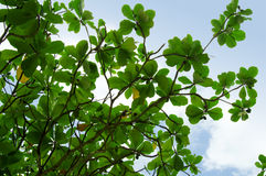 Green tropical flora Royalty Free Stock Images