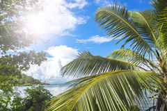 Green tropical forest and azure indian ocean. Stock Image