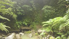 Green tropical forest and rocky river flowing on rocks drone view. River stream in rainforest and old stairs. Wild
