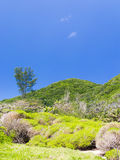 Green tropical forest Royalty Free Stock Photography