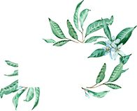 Green tropical frame. Tangerine flower and leaves template. Watercolor illustration. royalty free illustration