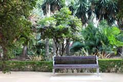 Green tropical garden. Bench in tropical park with green palm trees, clematis and other exotic plants and flowers. Tropical background Royalty Free Stock Photo
