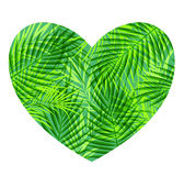 Green tropical heart. Green heart of tropical palm leaves on a white background Royalty Free Stock Photo