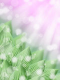 Green tropical hosta leaves with sunny spring pink abstract bokeh background Stock Photography