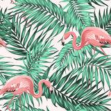 Green tropical jungle leaves ping flamingo couple stock illustration