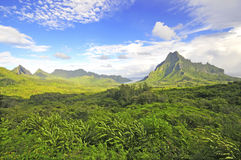 Green Tropical Landscape, Moorea French Polynesia Royalty Free Stock Image