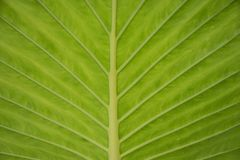 Green tropical leaf stock photography