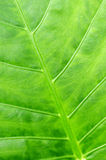 Green tropical leaf background Stock Images