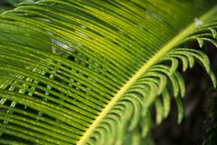 Green tropical leaf background Royalty Free Stock Images