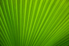 Green tropical leaf closeup Stock Images
