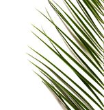 Green tropical leaf. On white background Stock Photo