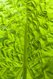 Green tropical leaf. Green leaf of a tropical plant in close-up stock photos