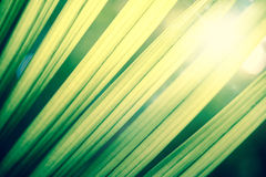 Green tropical leafs with backlight Royalty Free Stock Images