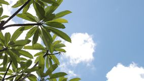 Green tropical leaves on a blue sky background. Sunny day on the tropical island of Bali, Indonesia. Asia stock footage