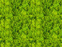 Green tropical leaves field seamless pattern tile Royalty Free Stock Photos